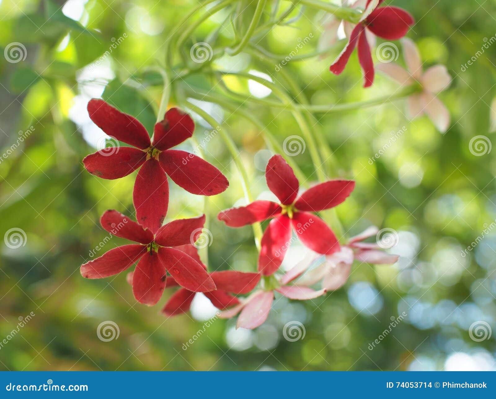 Gutenmorgen Mit Blumenstrauß Von Blumen Stockfoto Bild Von