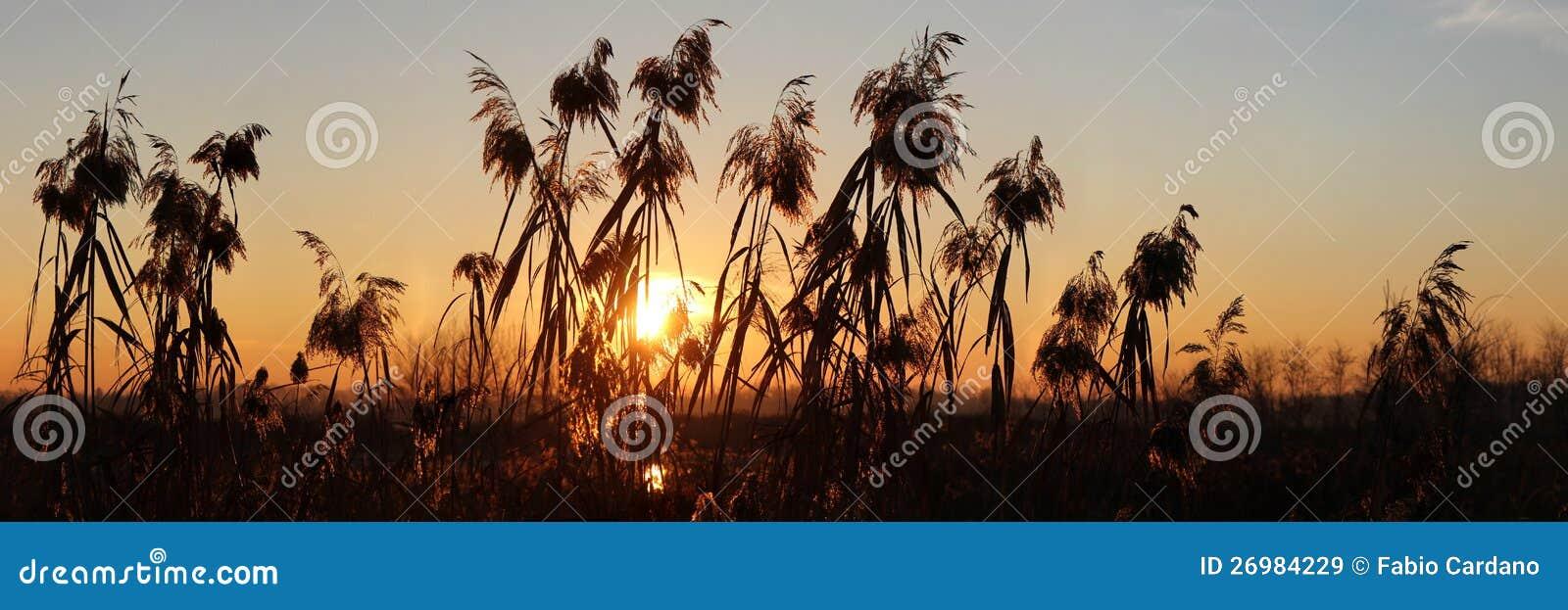 Gutenmorgen Winter Stockbild Bild Von Harmonie Relax