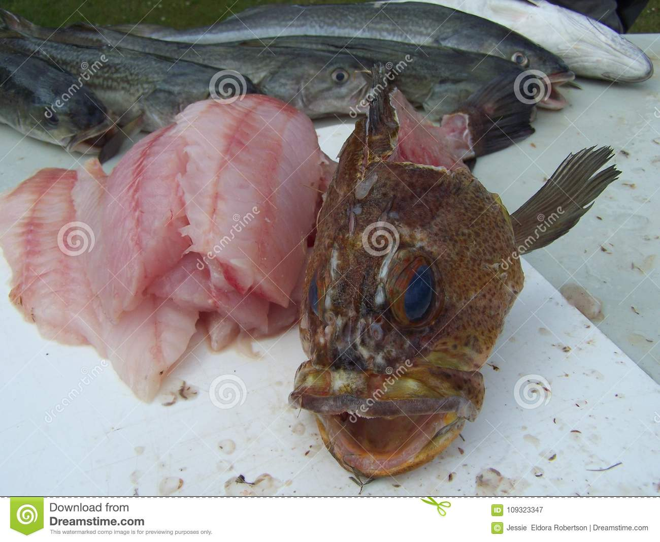 Ling Fish | Gutted Rock Fish With Green Ling Fish Stock Image Image Of Gutted