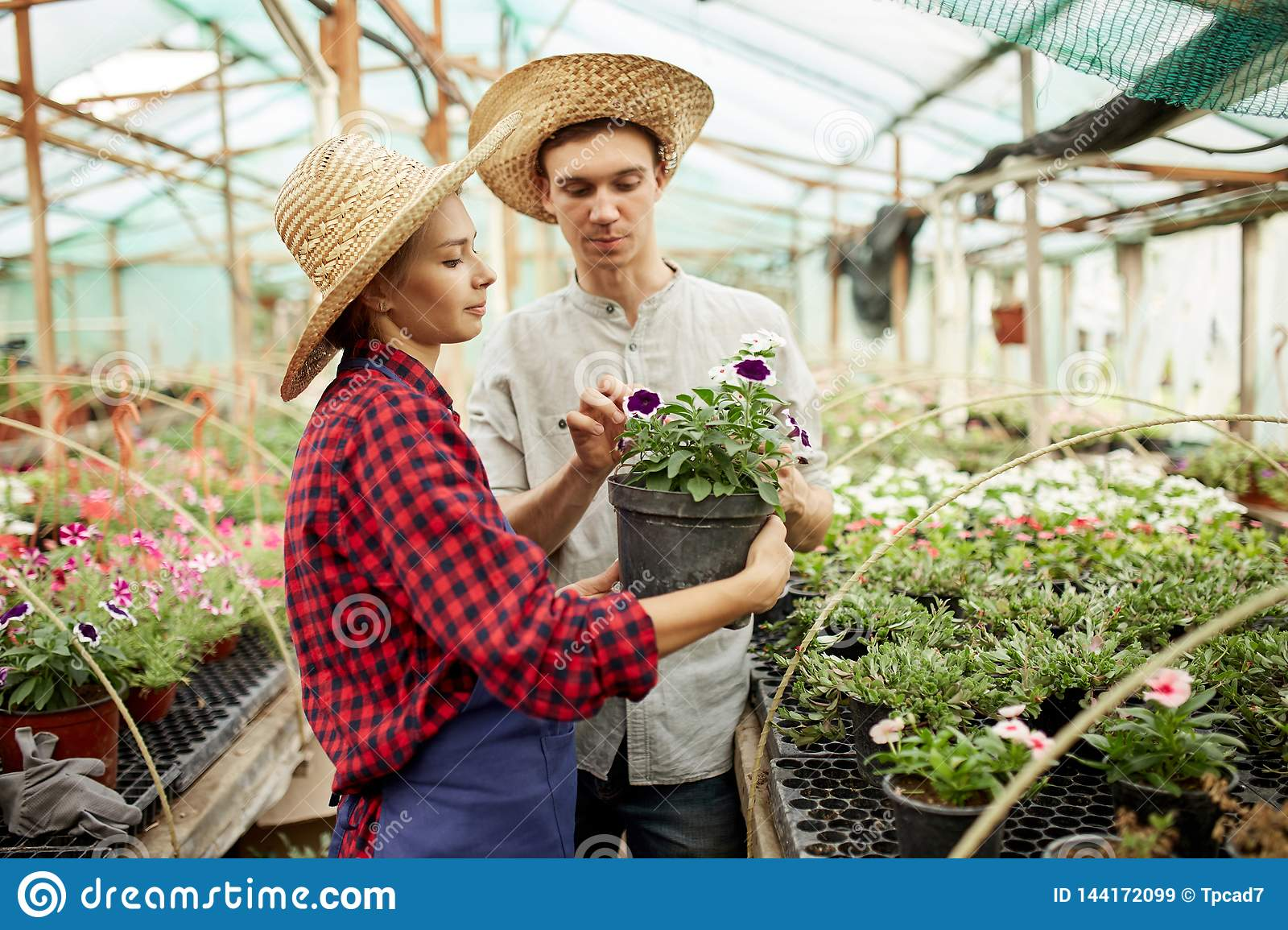 Guy and girl gardeners  in a straw hats holds and looks at the pot with flower in greenhouse on a sunny day.