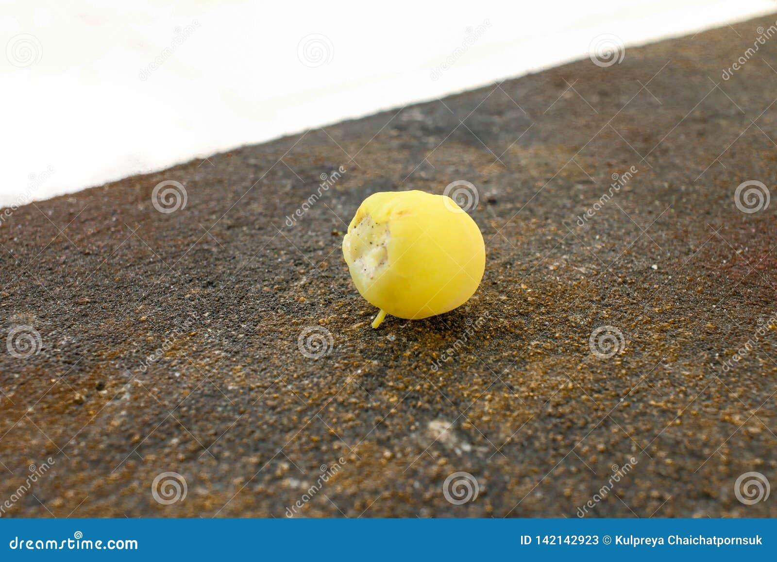 Gwiazdowy agrest w owoc