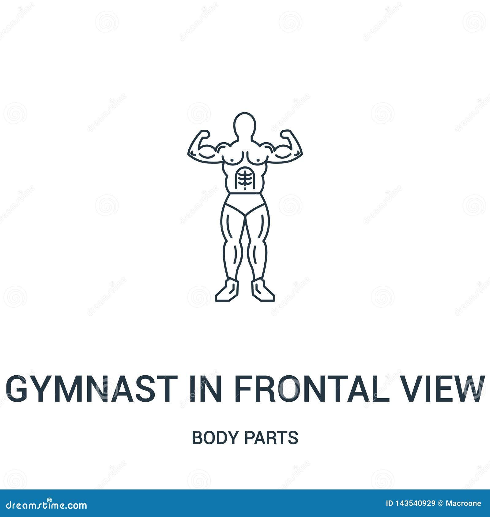 Gymnast i den frontal sikten som visar hans muskelsymbolsvektor från kroppsdelsamling Tunn linje gymnast i frontal hans siktsuppv