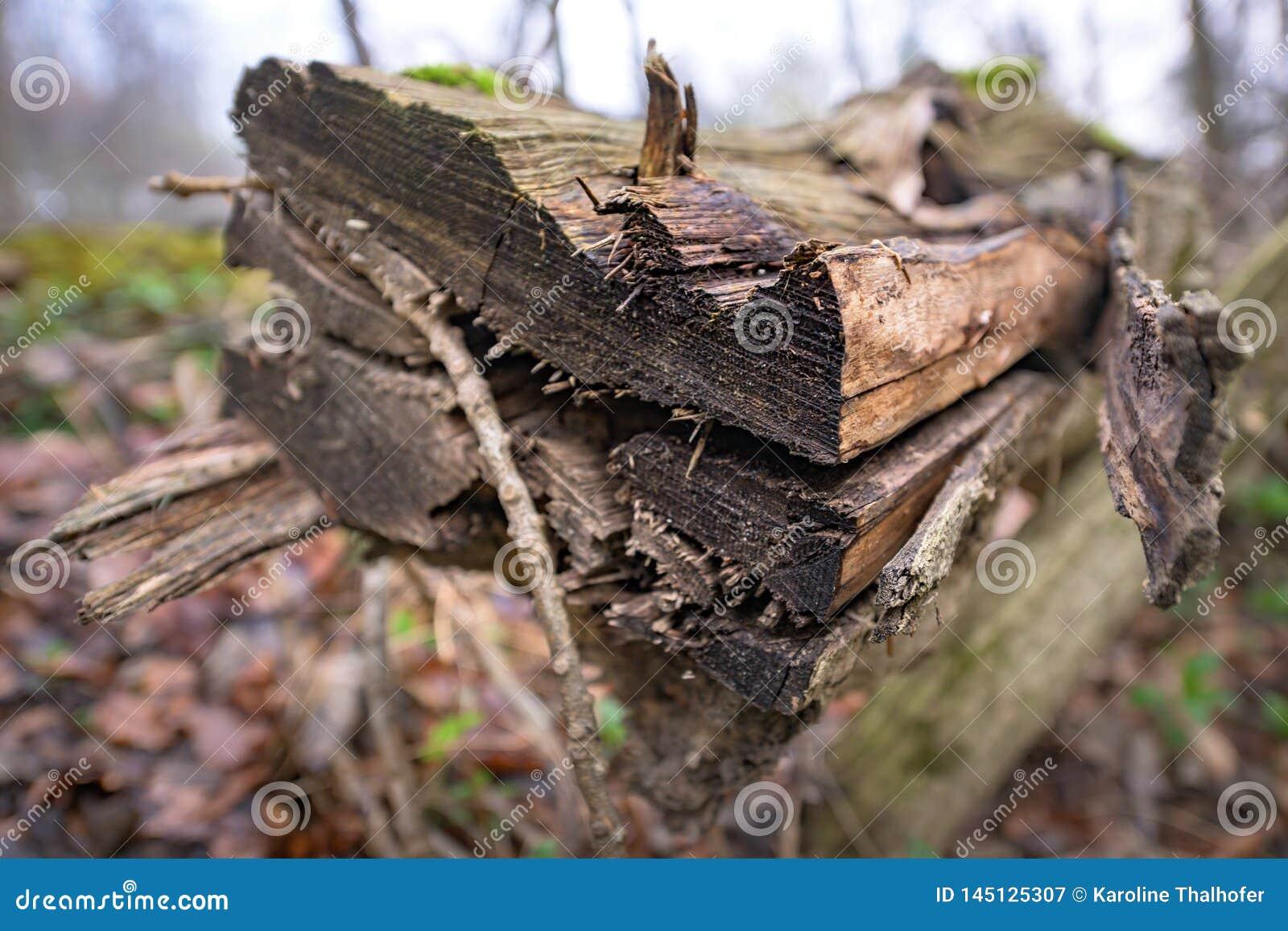 Hábitat natural para los insectos en el bosque por la mañana Madera putrefacta como protección para preservar biodiversidad