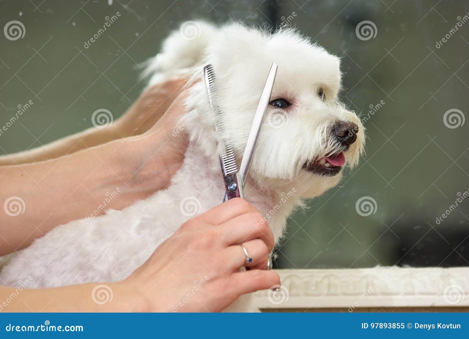 Hände der Frau, Hundepflegen