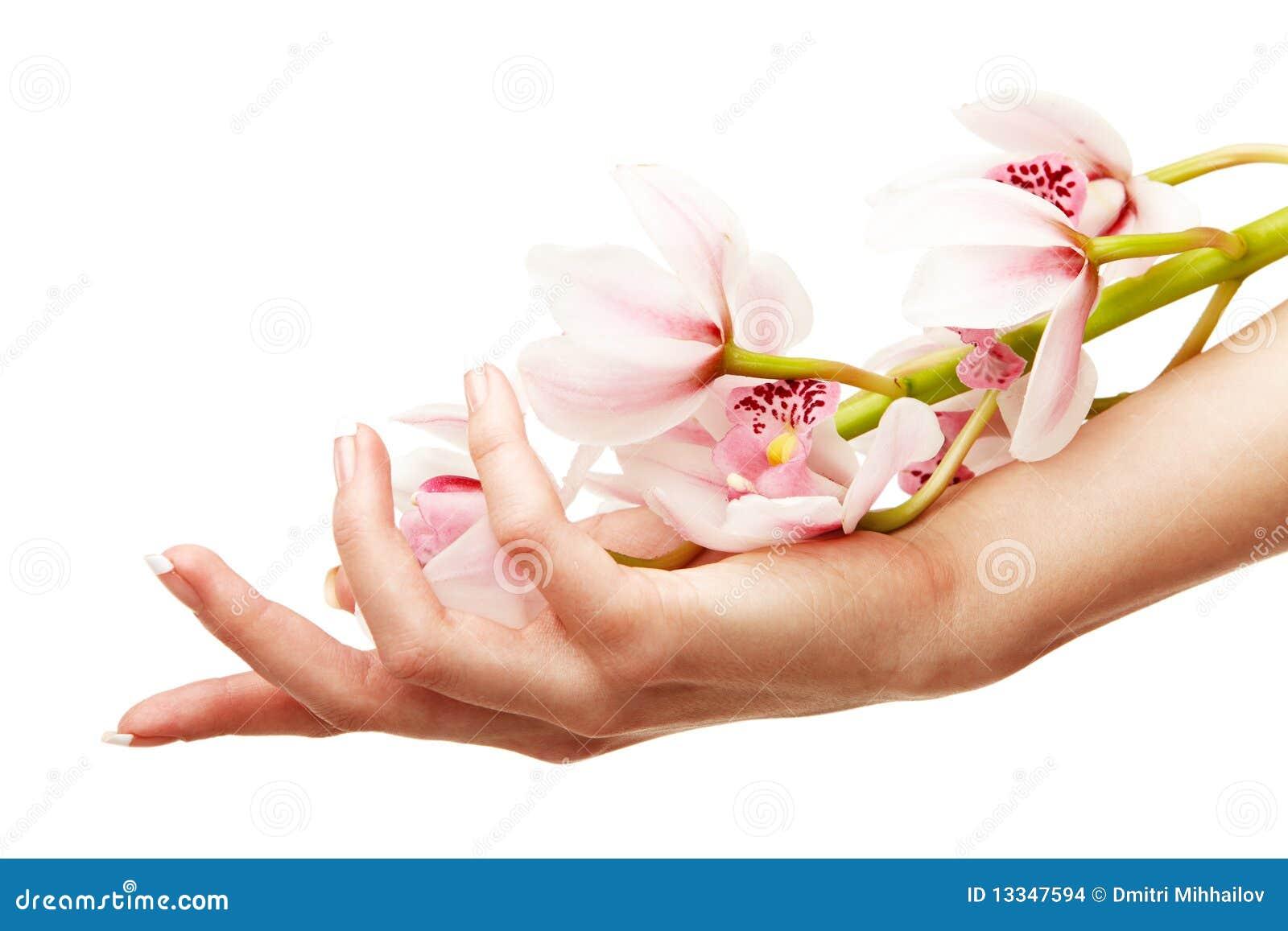 Hände und Orchidee