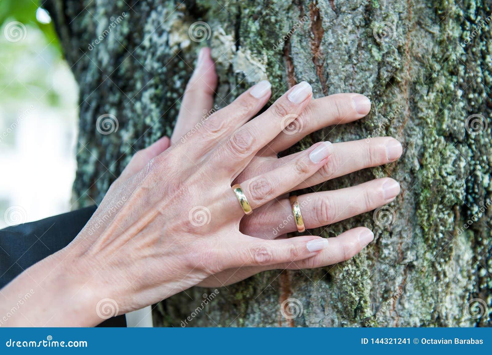 Händer av ett nytt gift par med vigselringar på trädstammen
