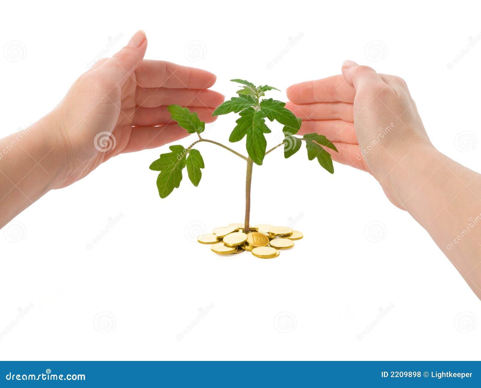 Händer planterar skydd