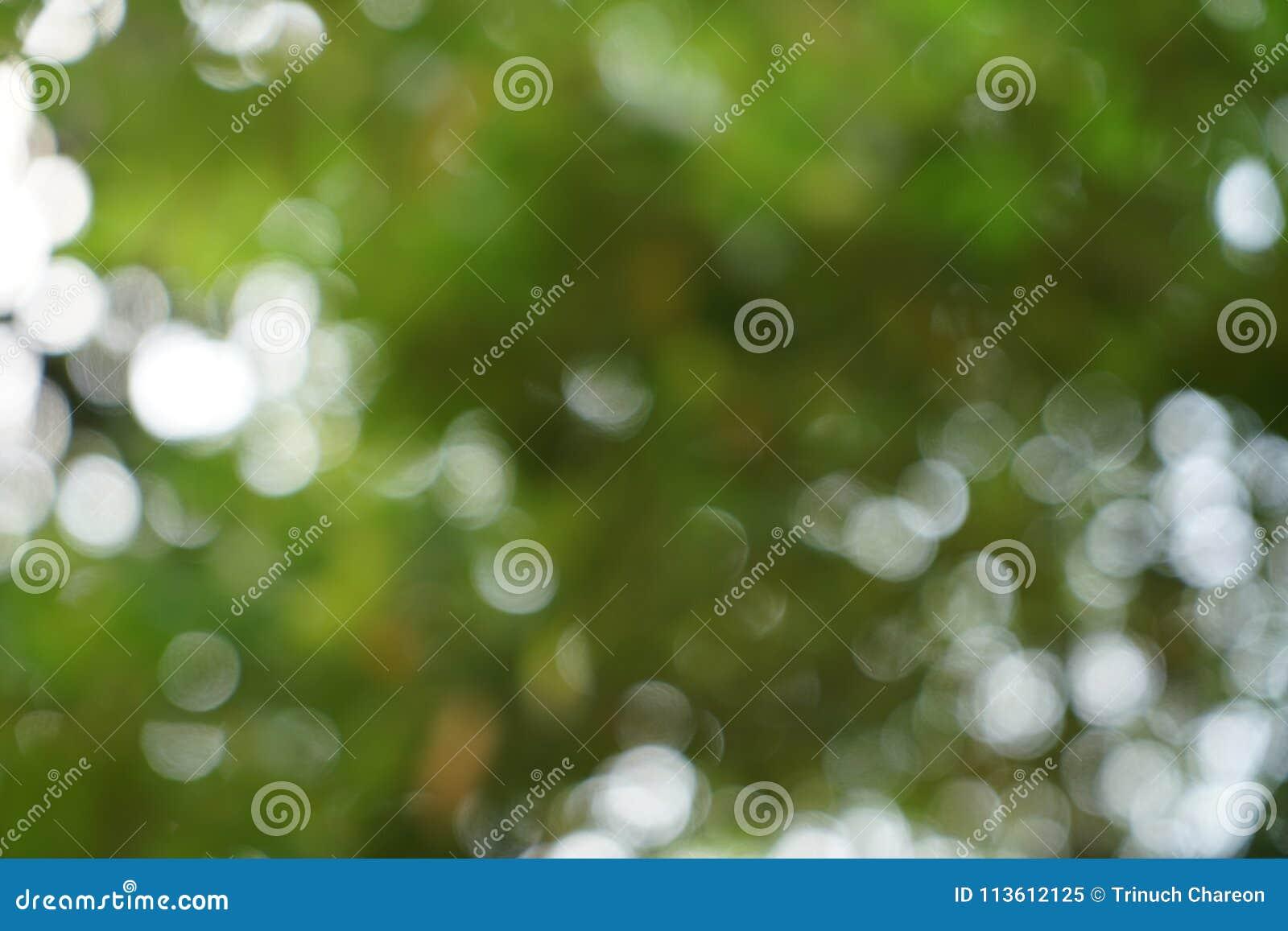 Härlig abstrakt plats av defocused naturligt ljust - gröna gulingsidor och bokehbakgrund för vitt ljus