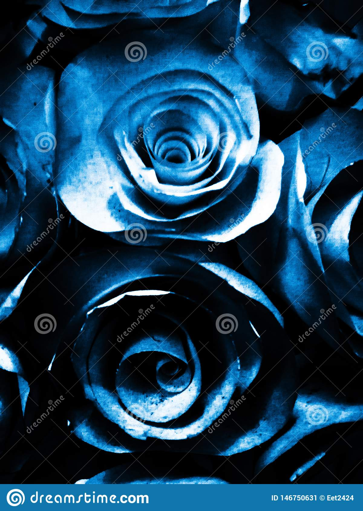 Härlig blå vit och svart rosa blommaillustrationbakgrund och textur i trädgården