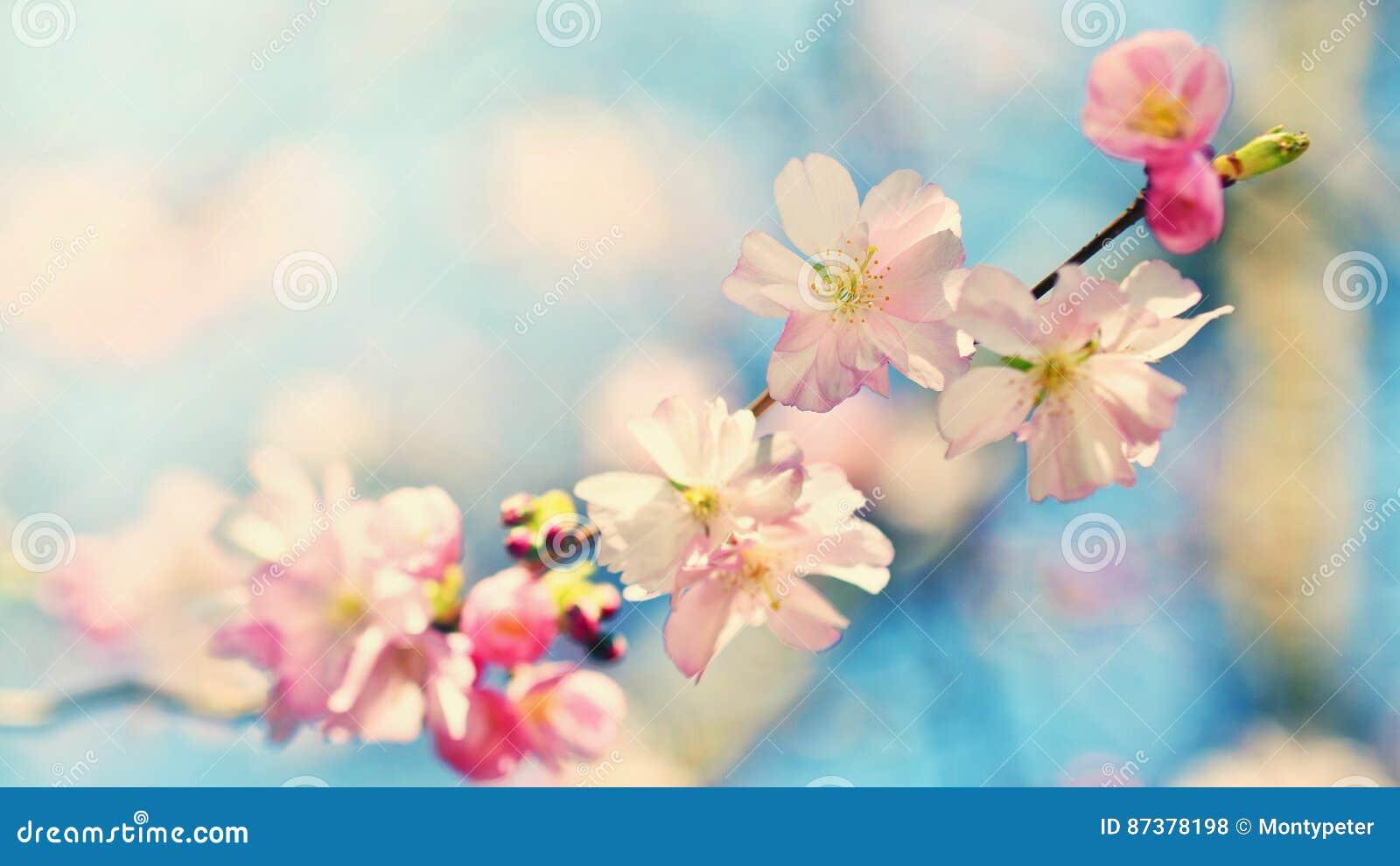Härlig blomningtree Naturplats med solen på solig dag just rained Abstrakt suddig bakgrund i vår
