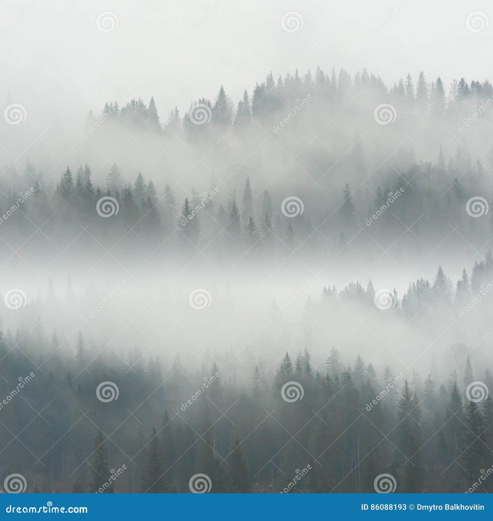 Härlig dimma i skog