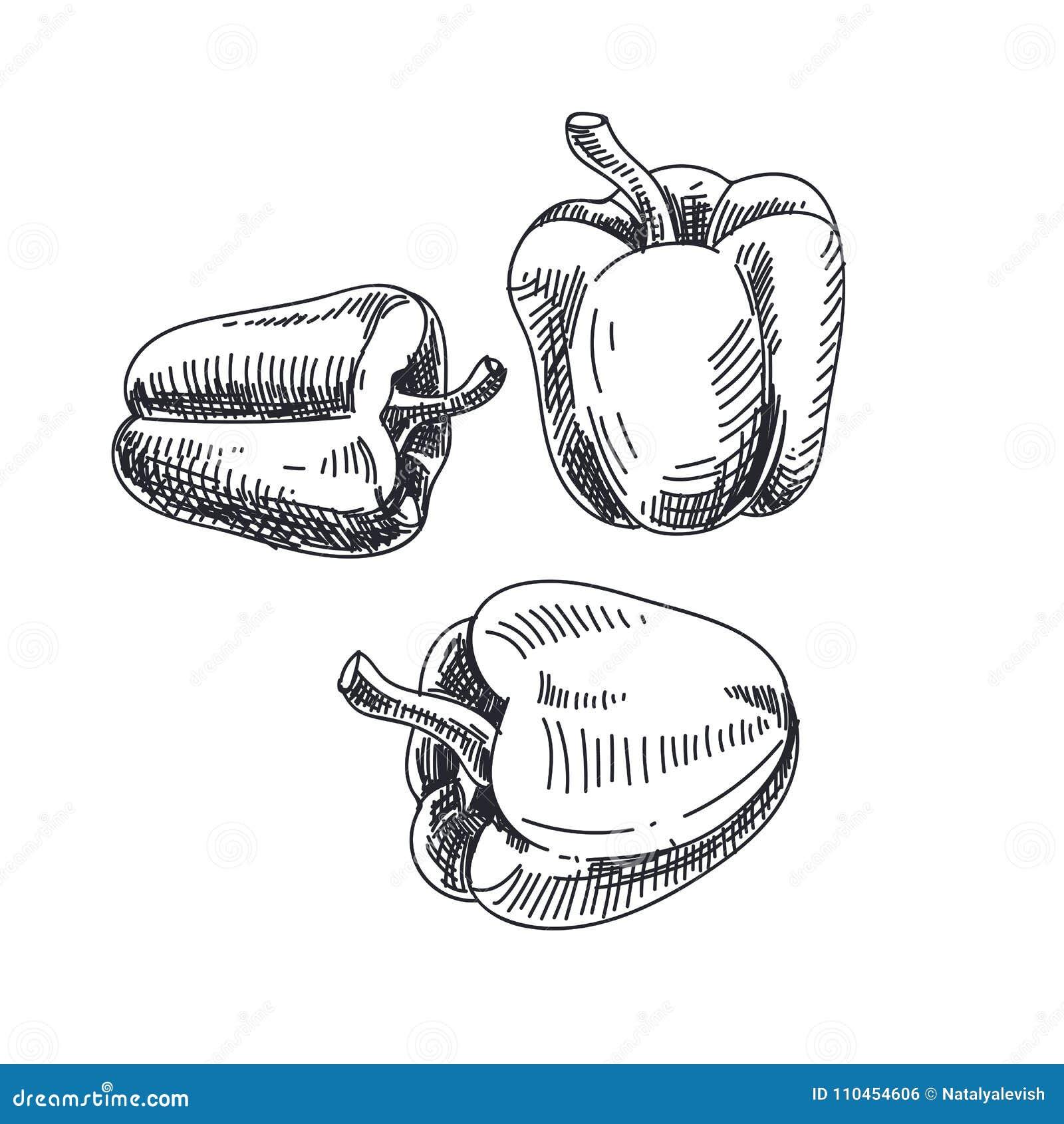 Härlig dragen grönsakillustration för vektor hand