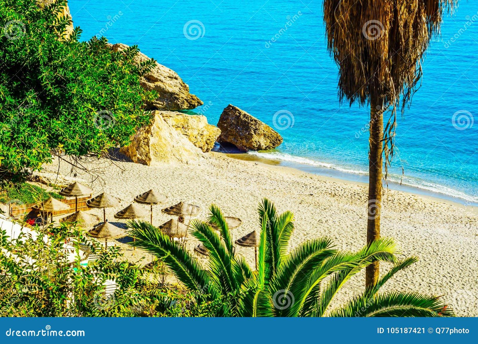 Härlig fördelande palmträd på stranden, exotiskt växtsymbol