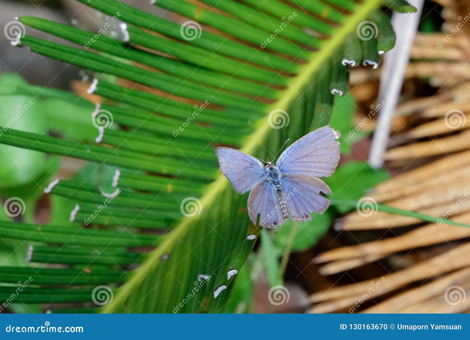 Härlig fjäril på gröna sidor