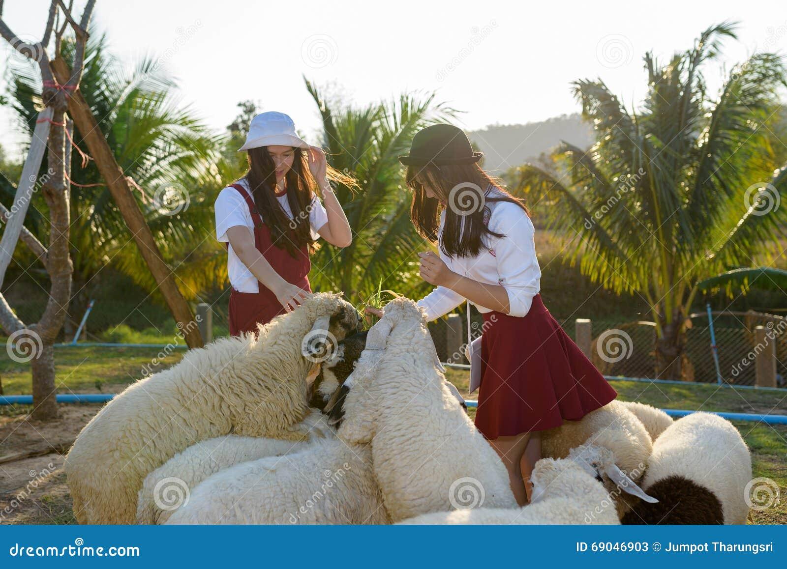 Härlig flicka på fårlantgård