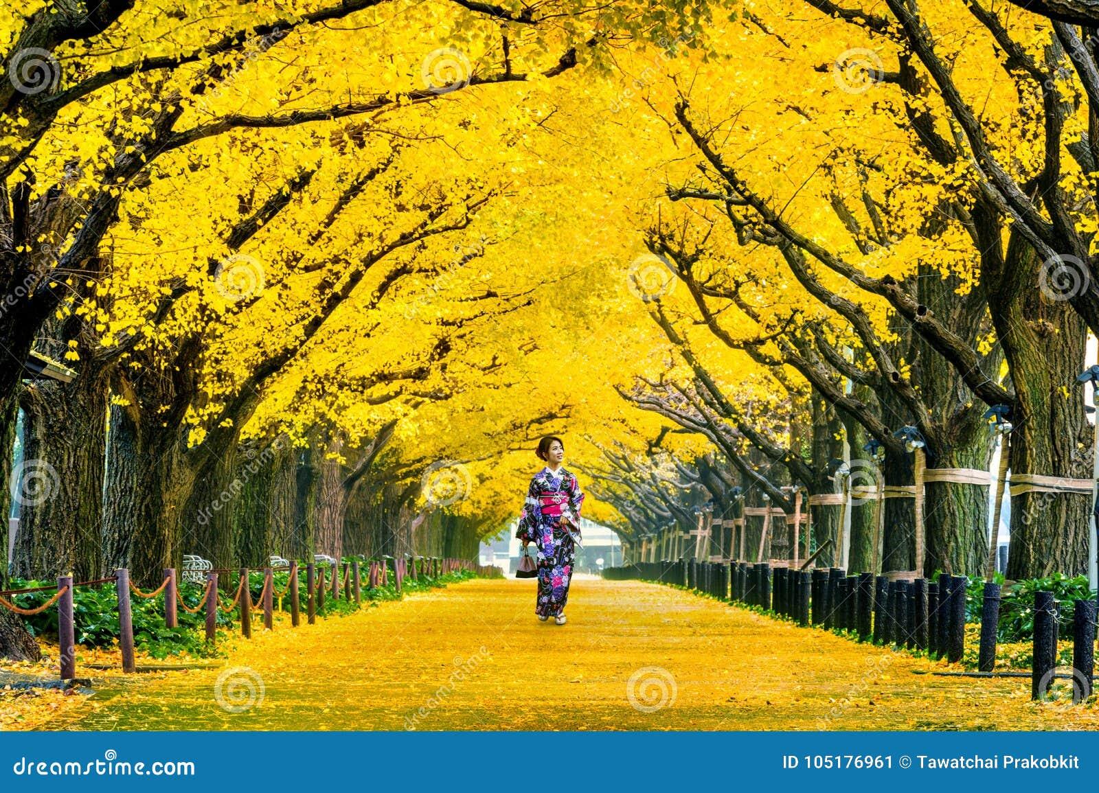 Härlig flicka som bär den japanska traditionella kimonot på raden av det gula ginkgoträdet i höst Hösten parkerar i Tokyo, Japan