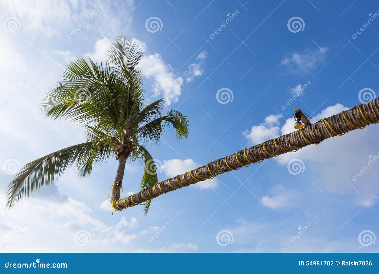 Härlig formkokospalm