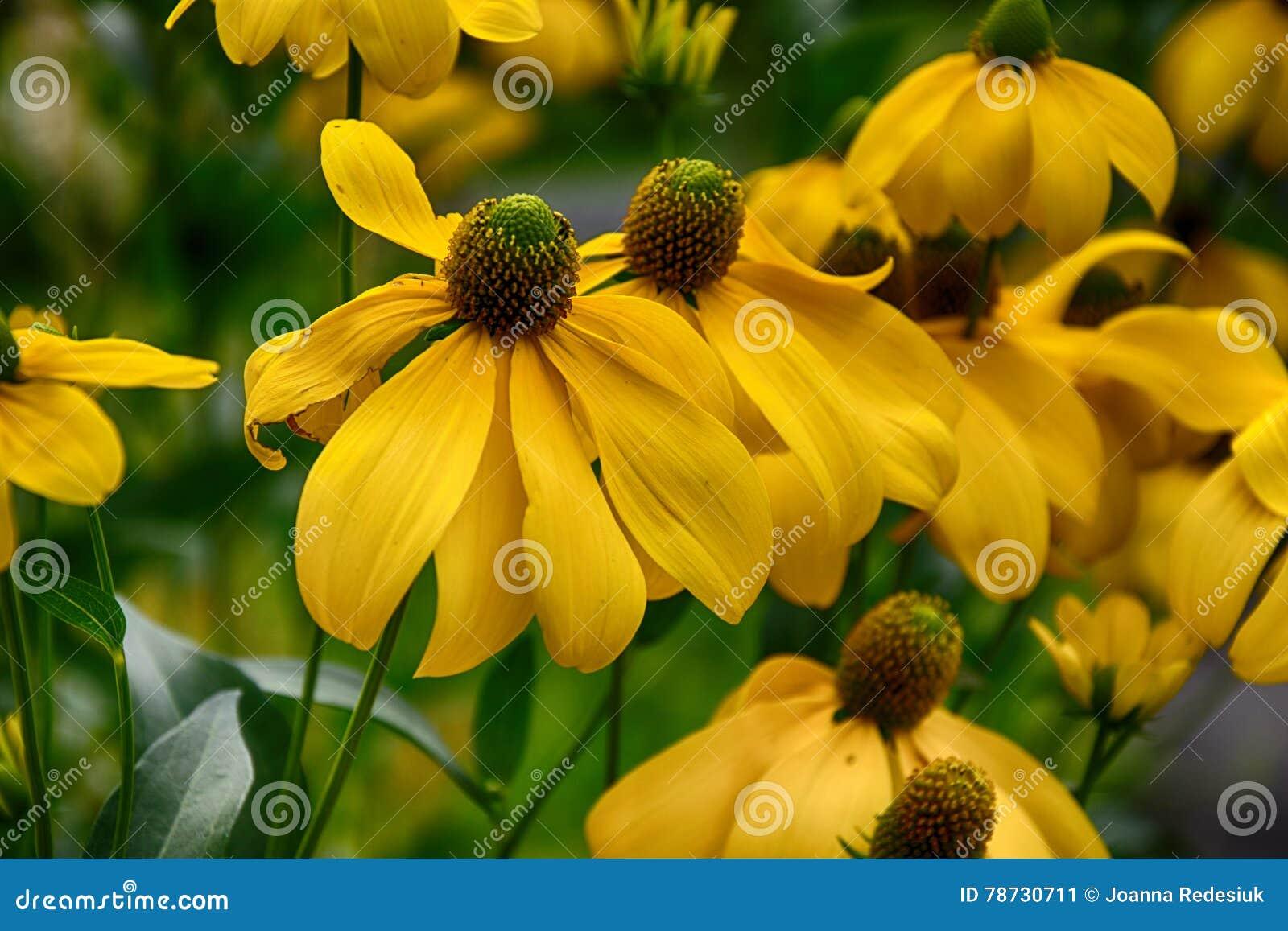 Härlig guling blommar i trädgården