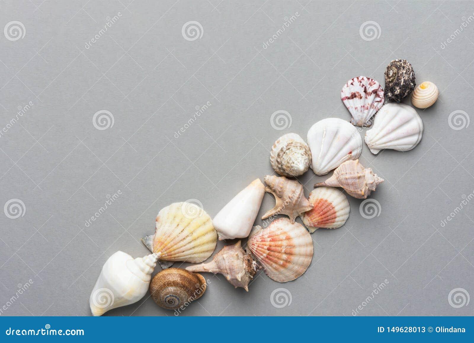 Härlig idérik nautisk sommarbakgrund Diagonal plan lekmanna- sammansättning från havsskal av olika formfärger på grå färger