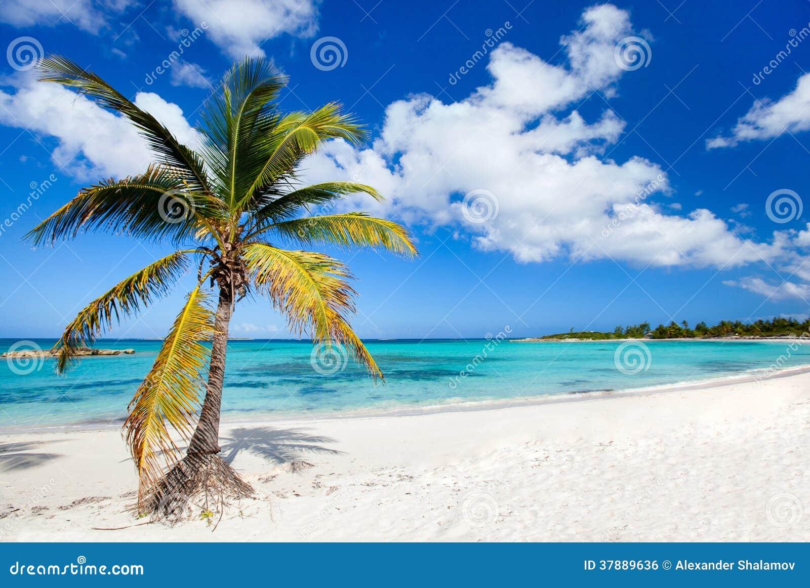 Härlig karibisk strand