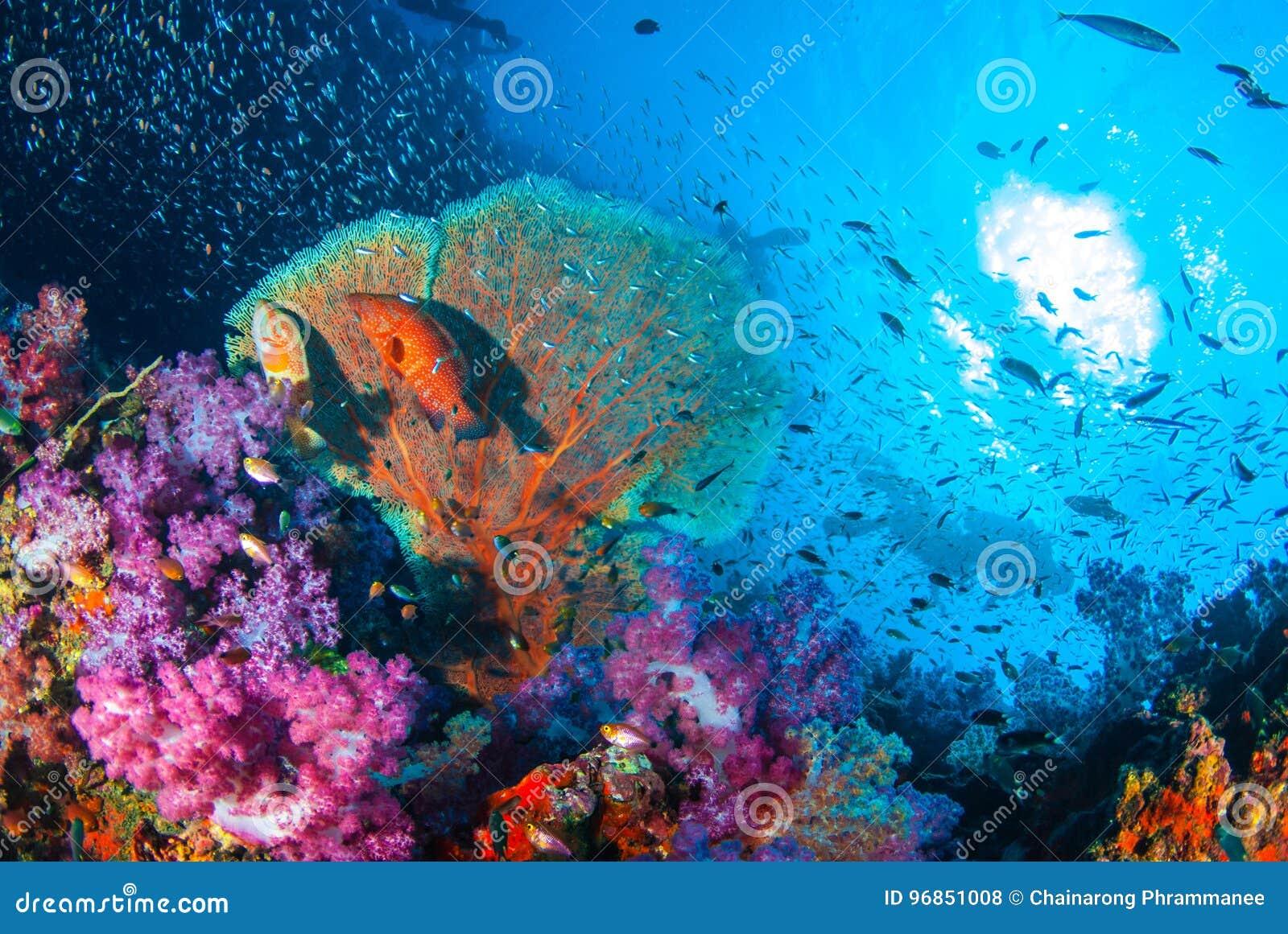 Härlig korallträdgårdrev