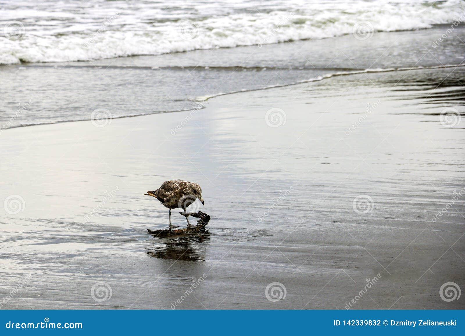 Härlig liten seagull på stranden av havet eller havet