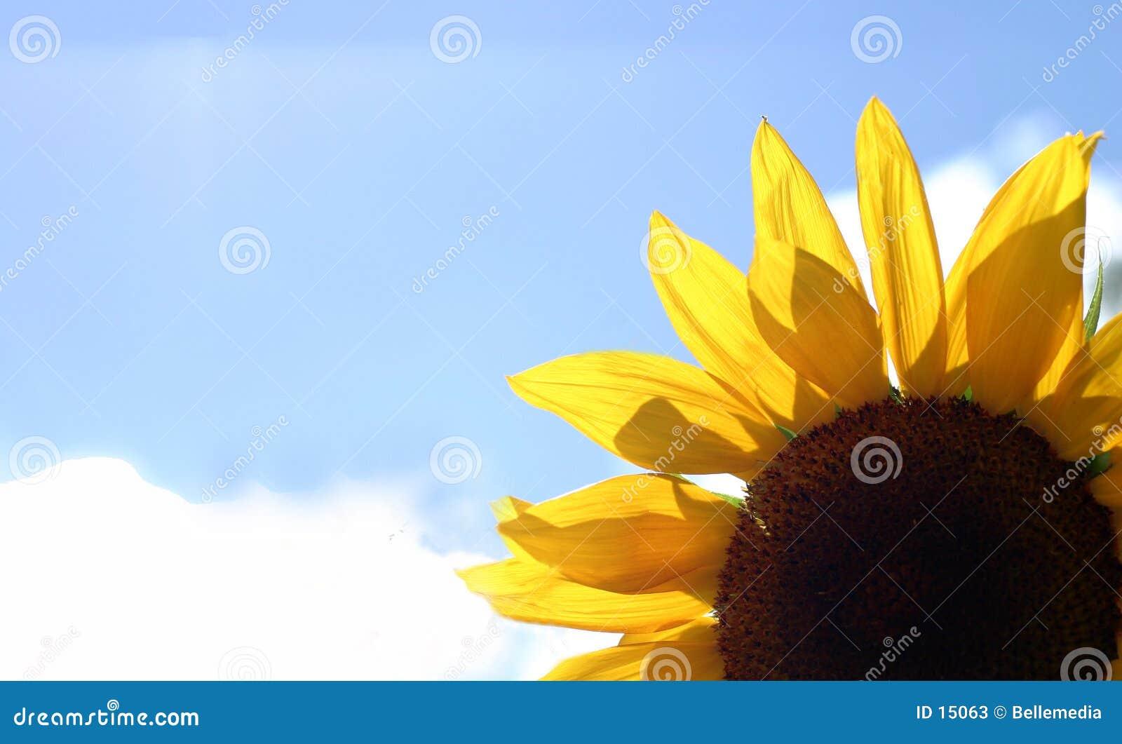 Härlig ljus blomma
