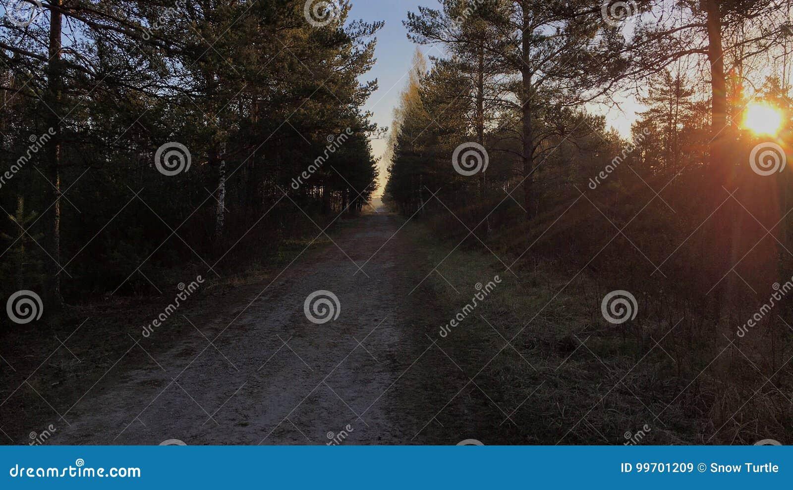 Härlig morgon i träskskog med soluppgång mp-skog med soluppgång