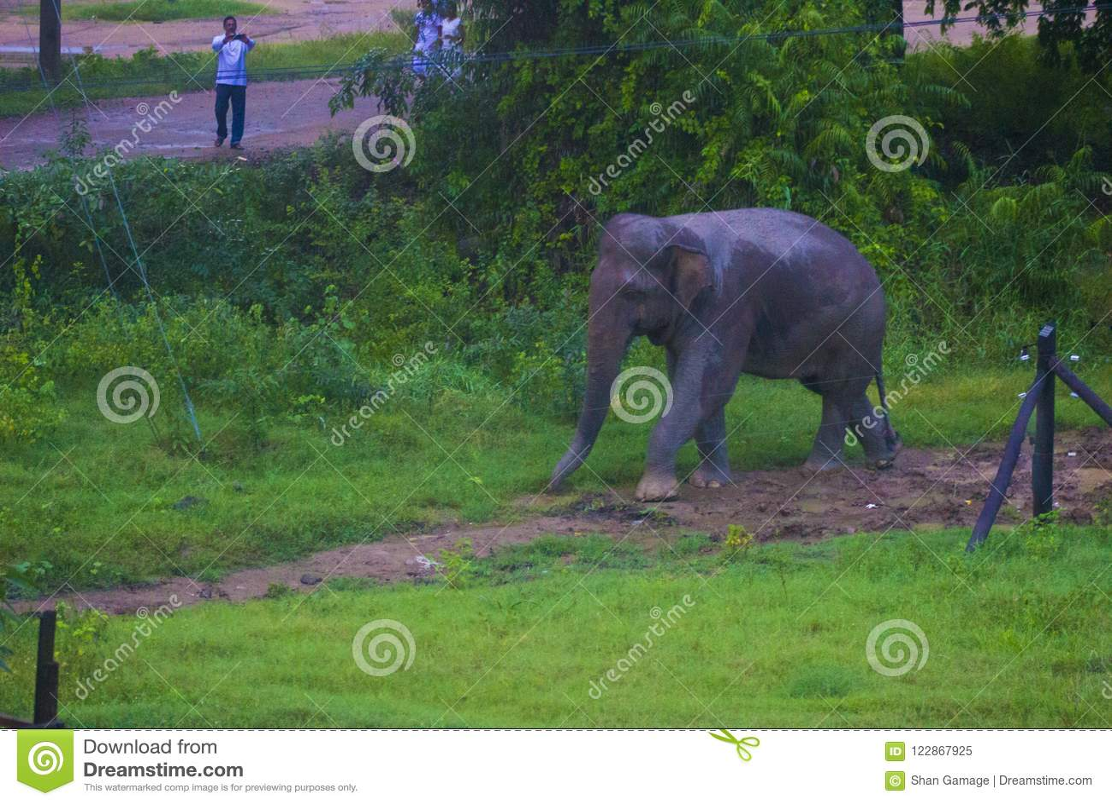 Härlig natur av Sri Lanka