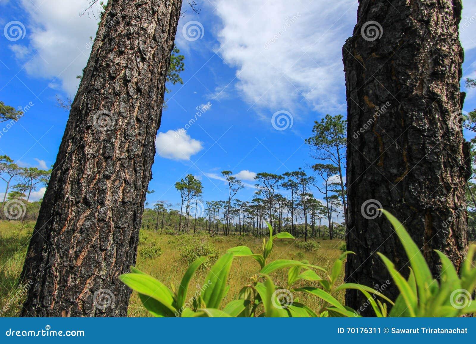 Härlig natur på Non sonblommafältet (Tung Salaeng Luang Nation Park)