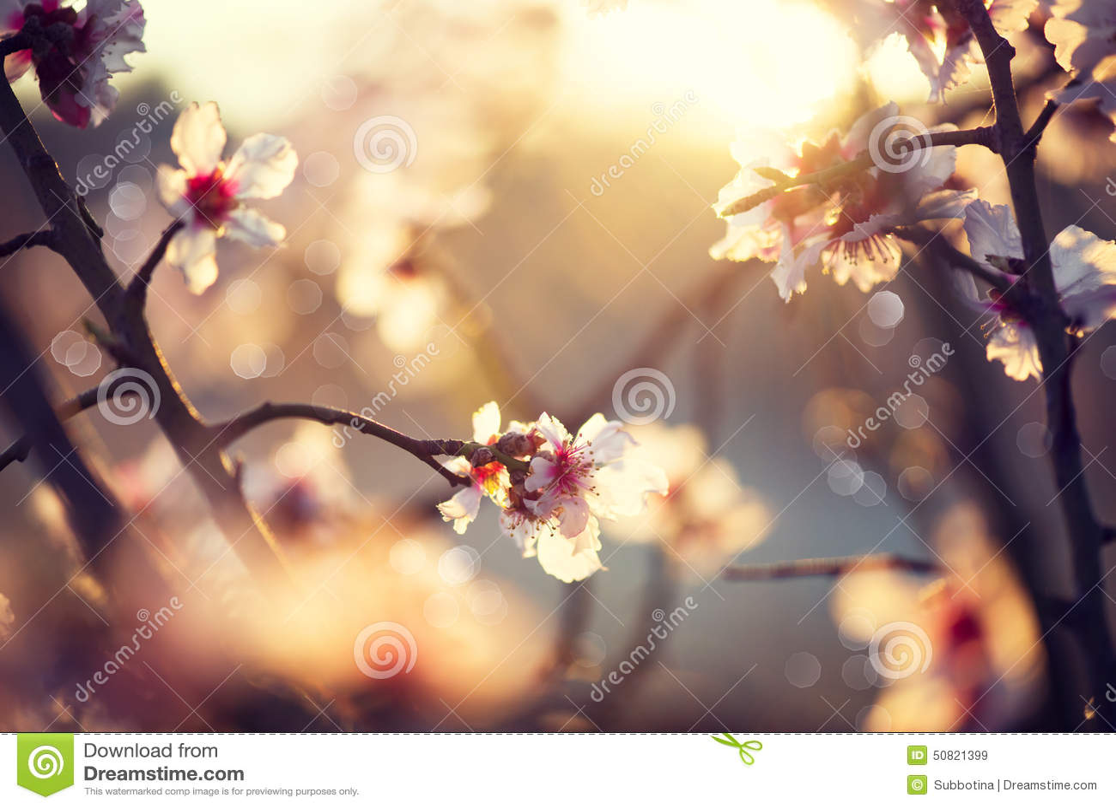 Härlig naturplats med det blommande trädet