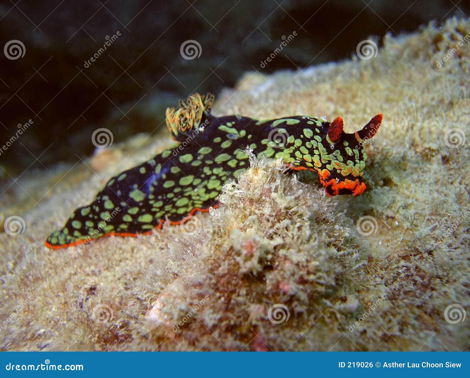 Härlig nudibranch
