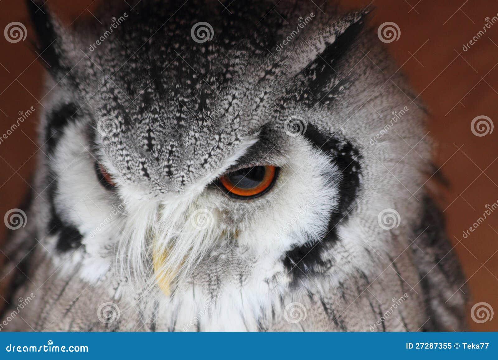 Härlig owl 2
