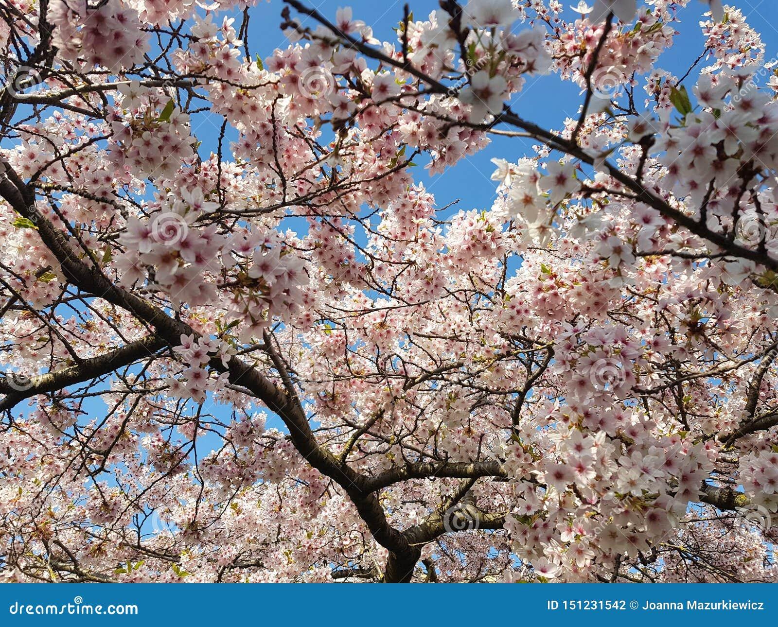 Härlig rosa blommabakgrund
