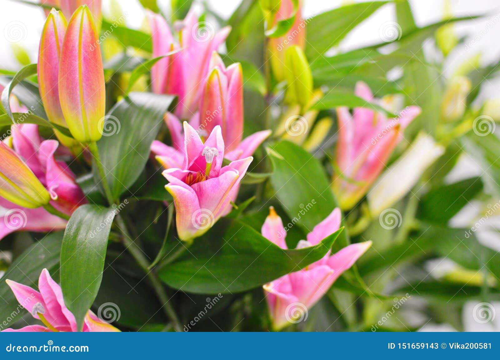 Härlig rosa lilja i blomsterhandel