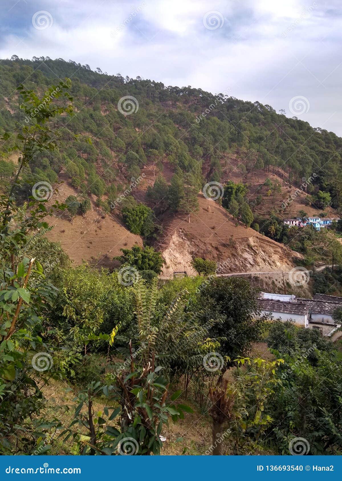 Härlig sikt av det Himalaya berget med gröna skogträd i uttarkashi i UK i Indien