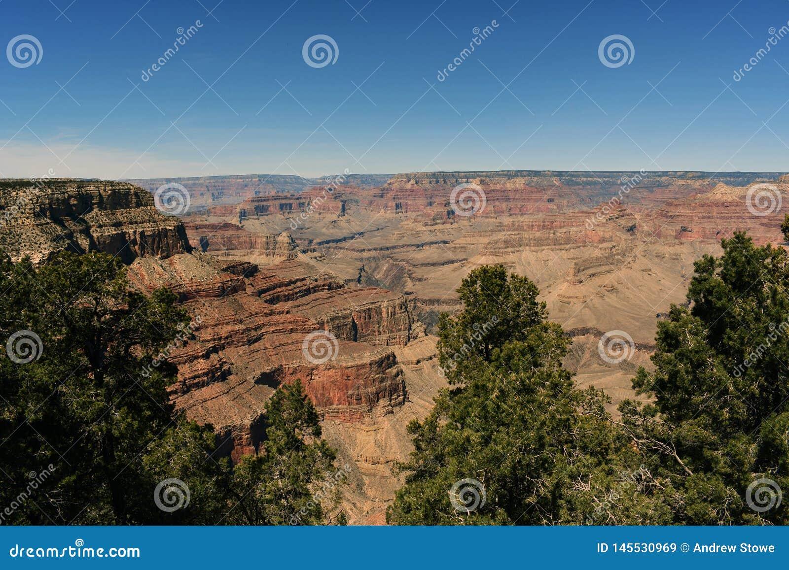 Härlig sikt av Grandet Canyon och träd