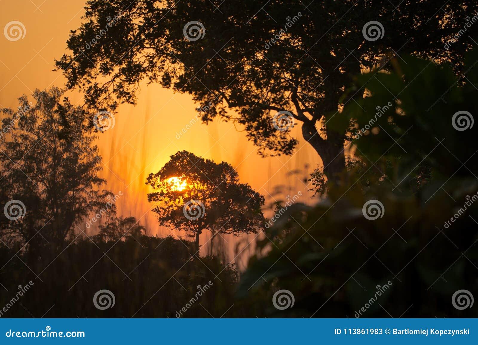 Härlig solnedgång i djungeln