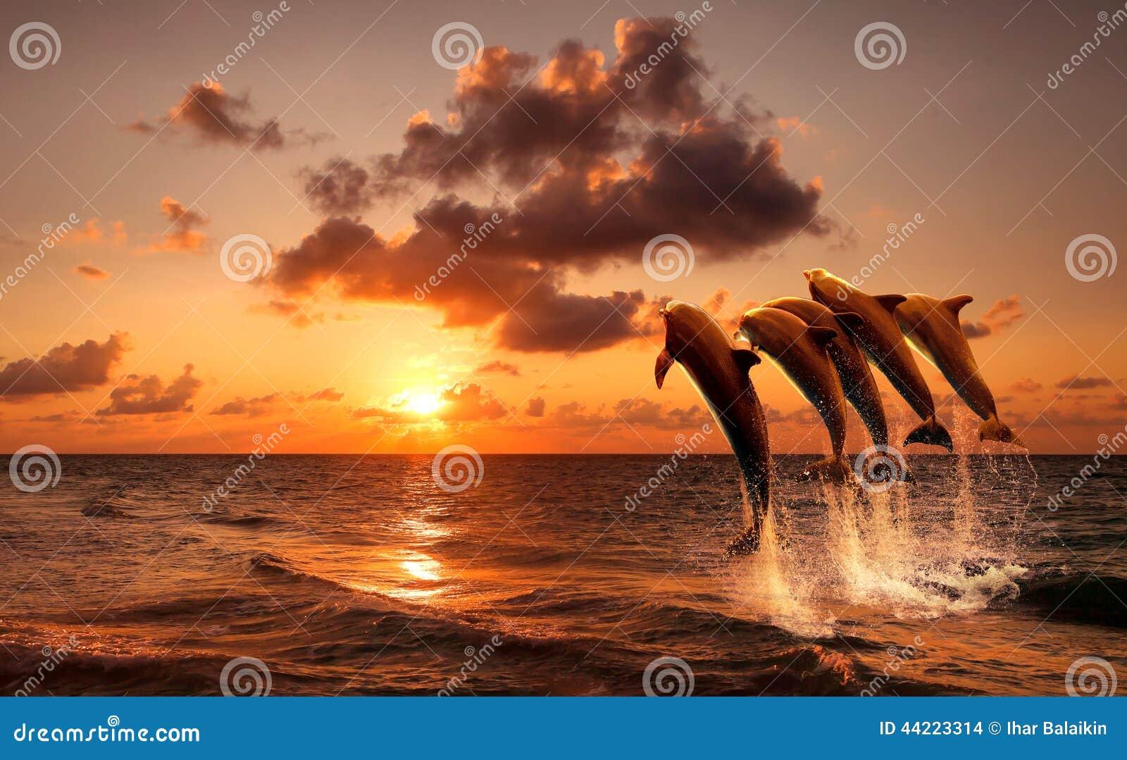 Härlig solnedgång med delfin