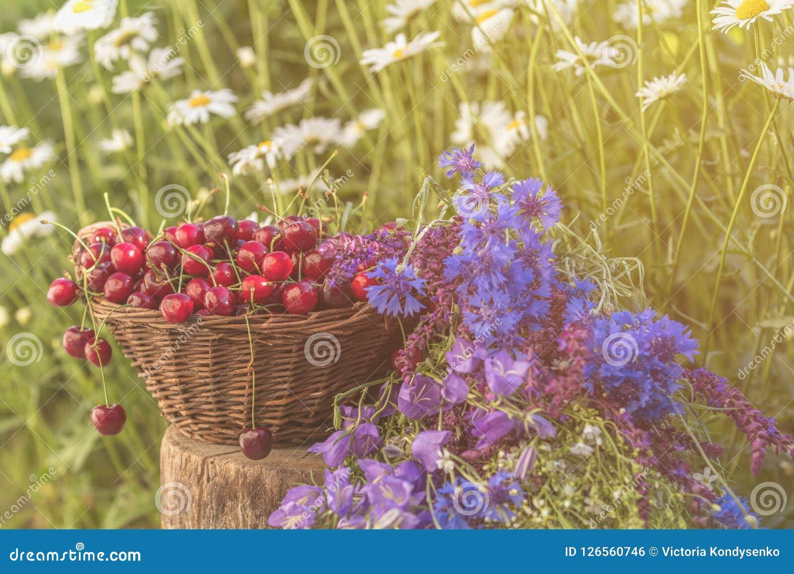 Härlig sommarbakgrund med körsbär och blommor Solljus,