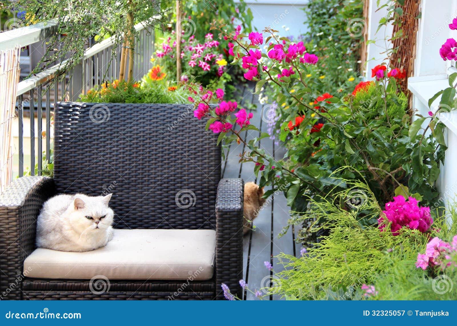 Härlig terrass med katter och lotten av blommor