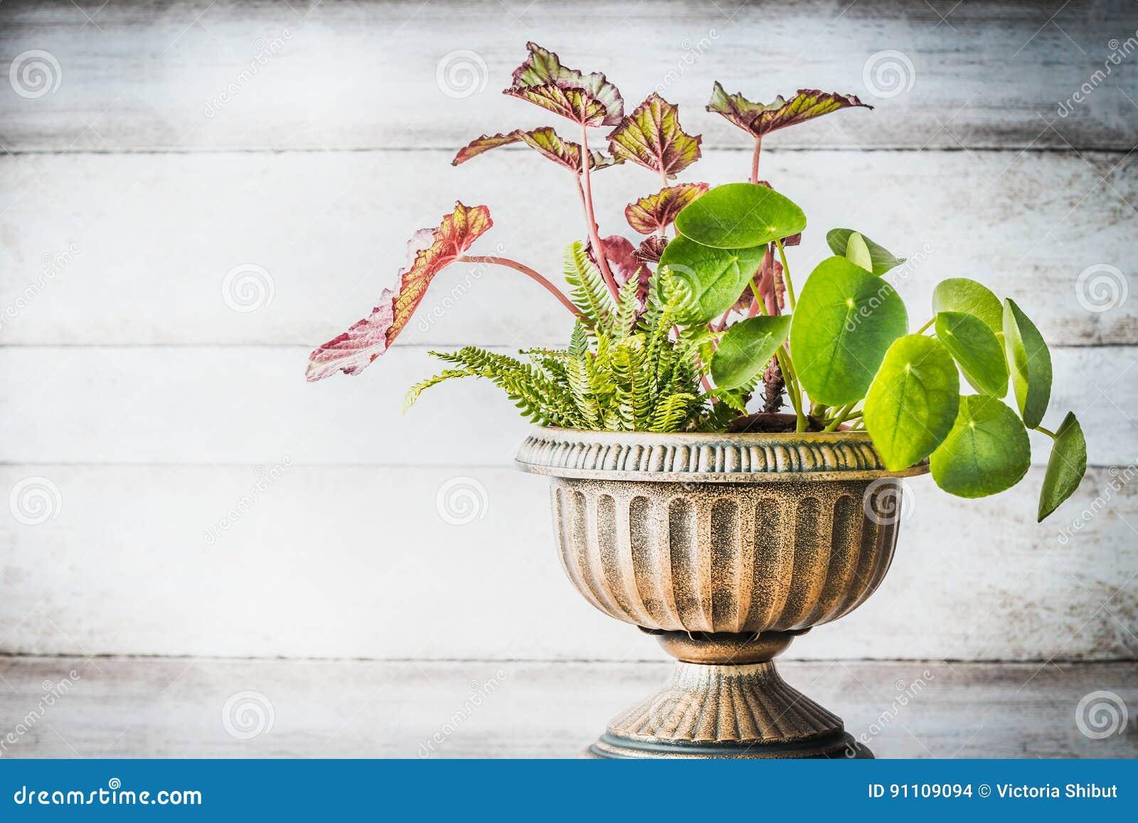 Härlig uteplatsurnaplanter med olika växter på vit träväggbakgrund, främre sikt Blomsterhandlare och behållare som arbeta i trädg