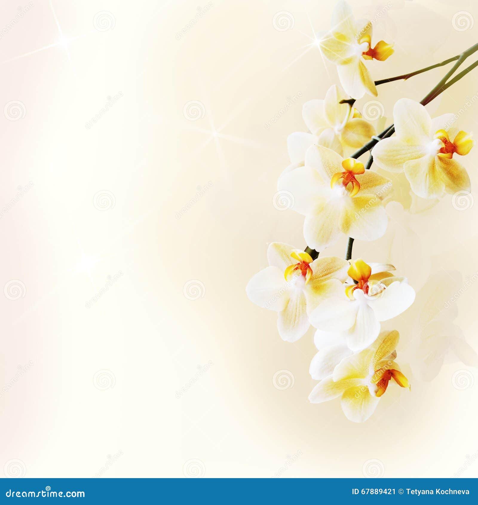 Härlig vitorchid