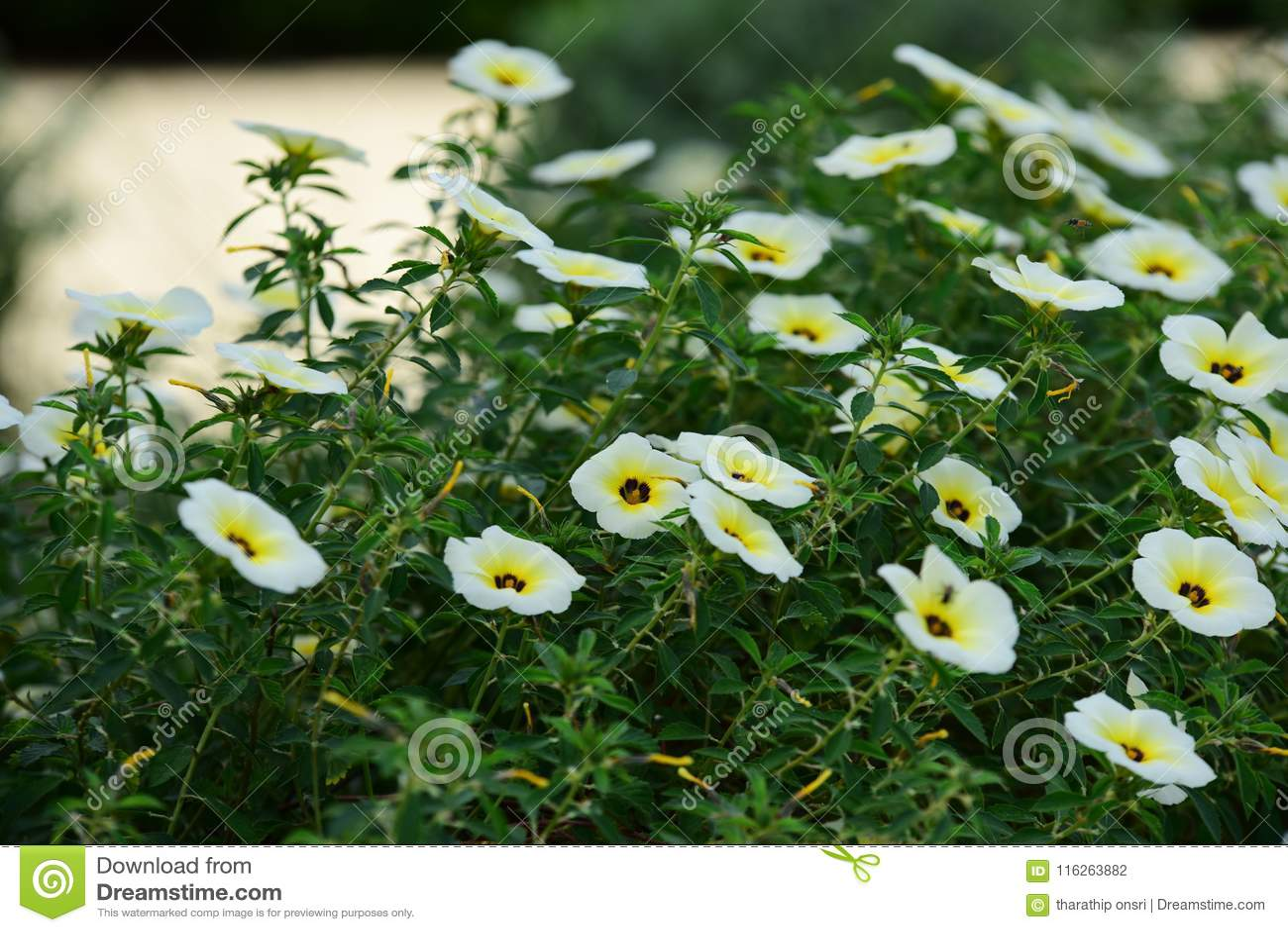 Härliga blommor i trädgården