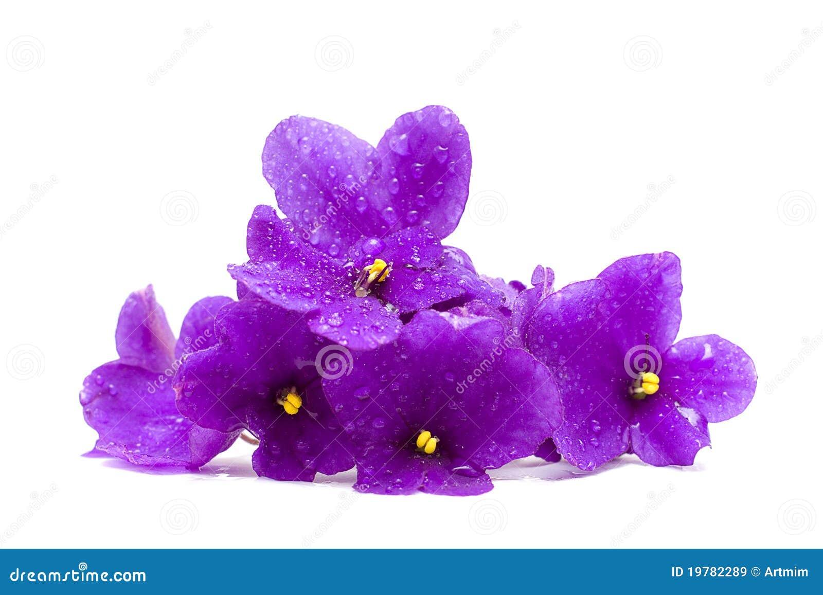 Härliga droppar blommar vatten