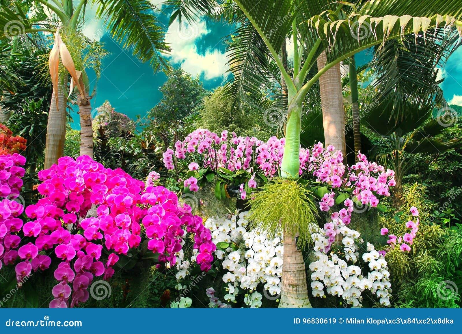 Härliga färgrika orkidér smyckar det exotiskt parkerar under blå himmel