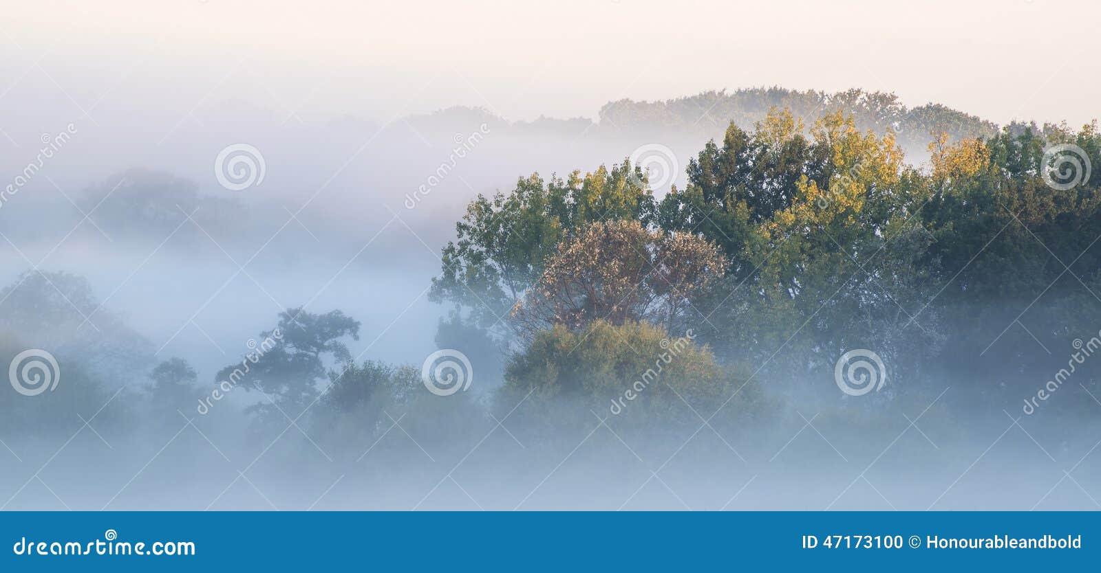 Härliga för soluppgångAutumn Fall för tjock dimma wi för landskap bygd