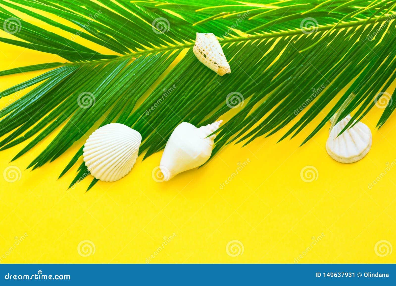 Härliga fjäderlika gröna skal för vitt hav för palmblad på gul väggbakgrund Tropiskt nautiskt idérikt begrepp för sommar