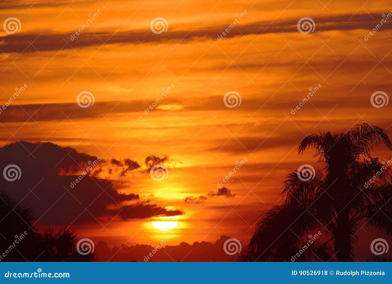 Härliga guld- Maui, Hawaii solnedgång med palmträd