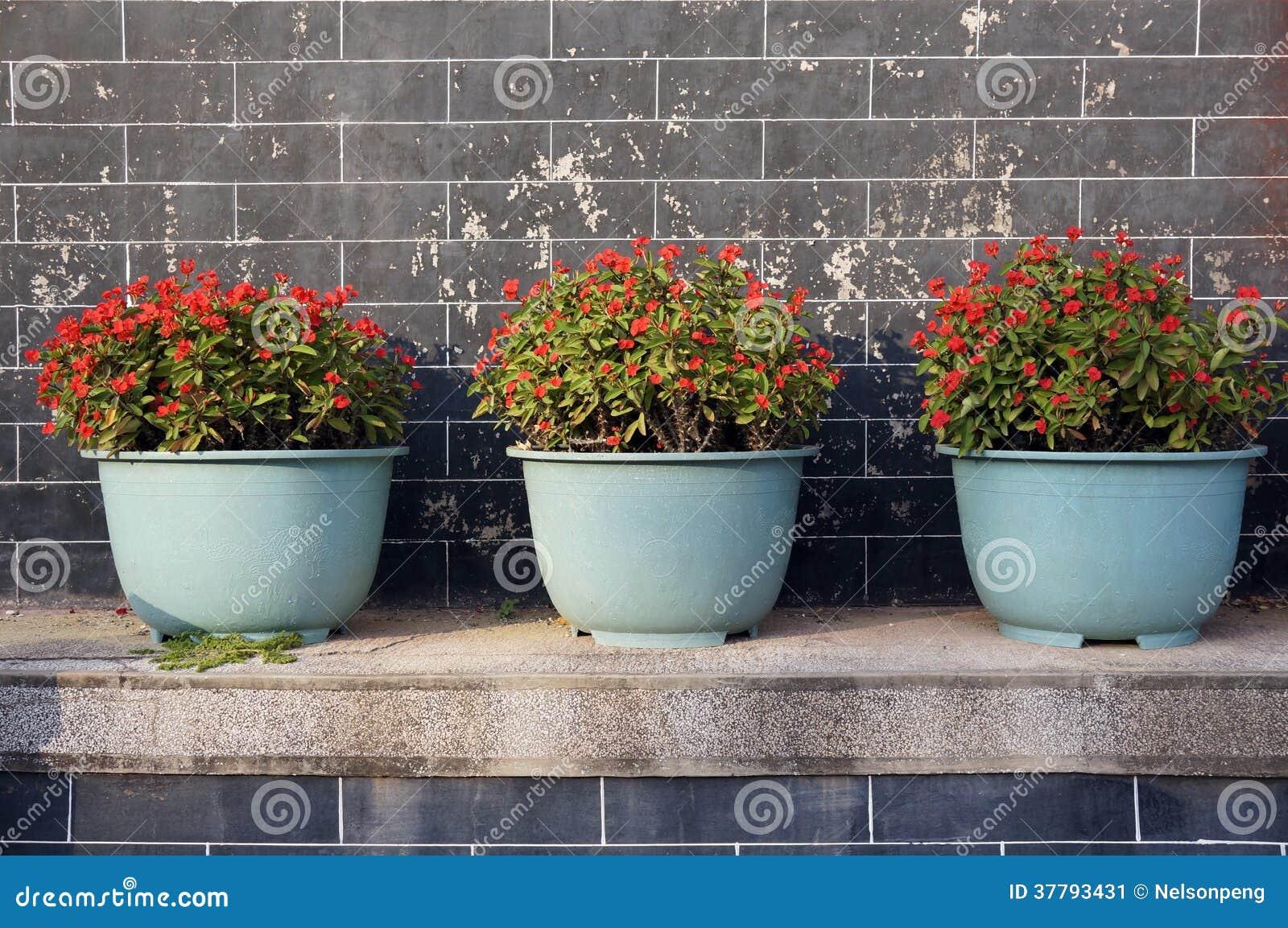 Härliga inlagda blommor